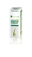 Huile Essentielle Bio Eucalyptus Globuleux à TOURS